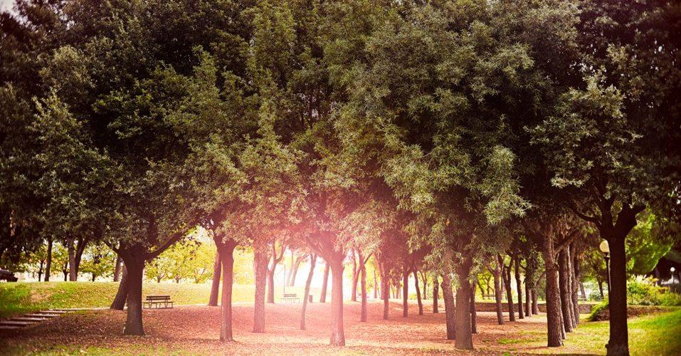Záhradnícka údržba verejnej zelene